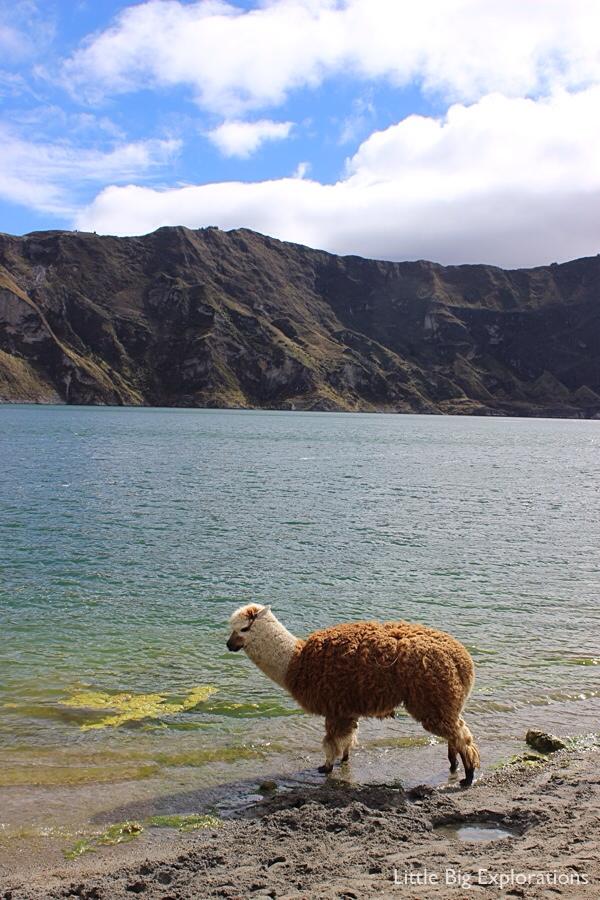 llama_quilotoa