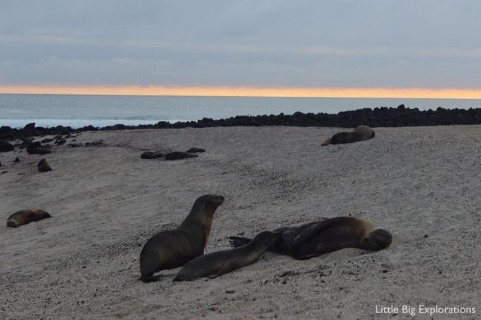 sea lion_san cristobal